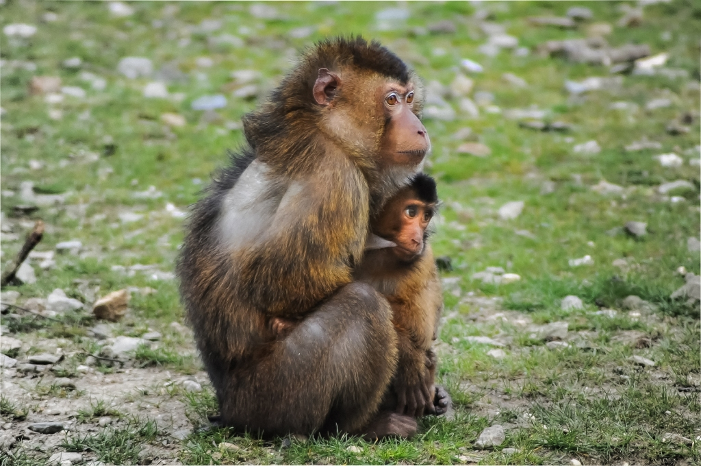 cute-animals-monkeys-young